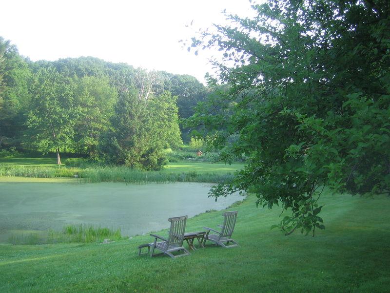The pond had an algae problem