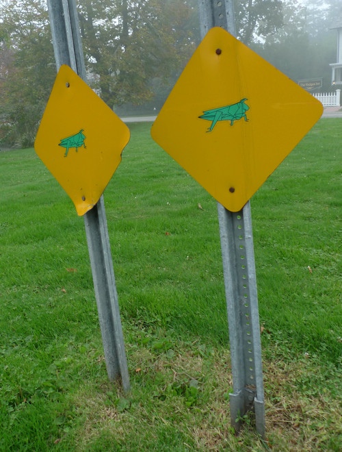 Grasshopper crossing