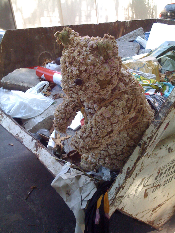 Sao paulo teddy