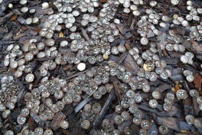 Mushrooms tiny