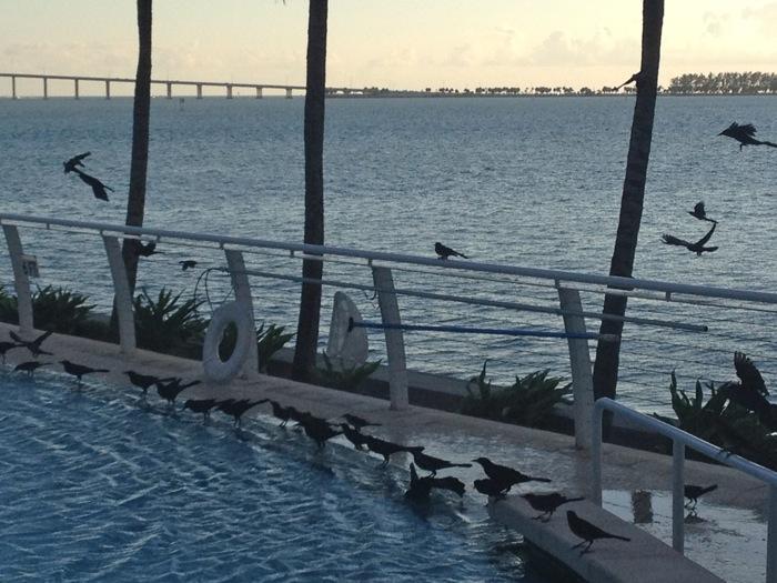 Birds by pool