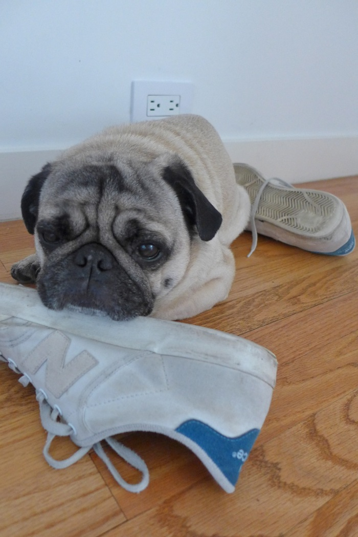 Howard resting chin on shoe