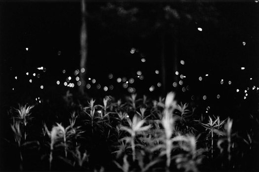 Gregory-crewdson-fireflies