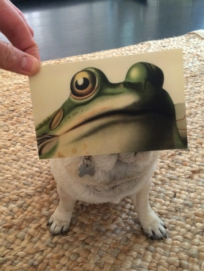 Bunnyfrog