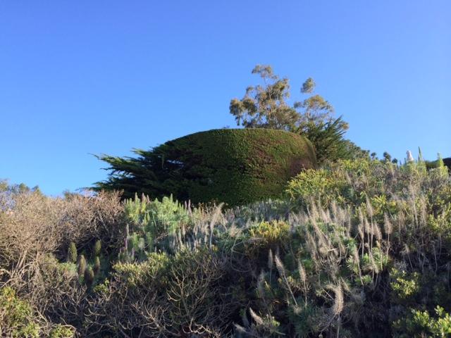Hedge mullet