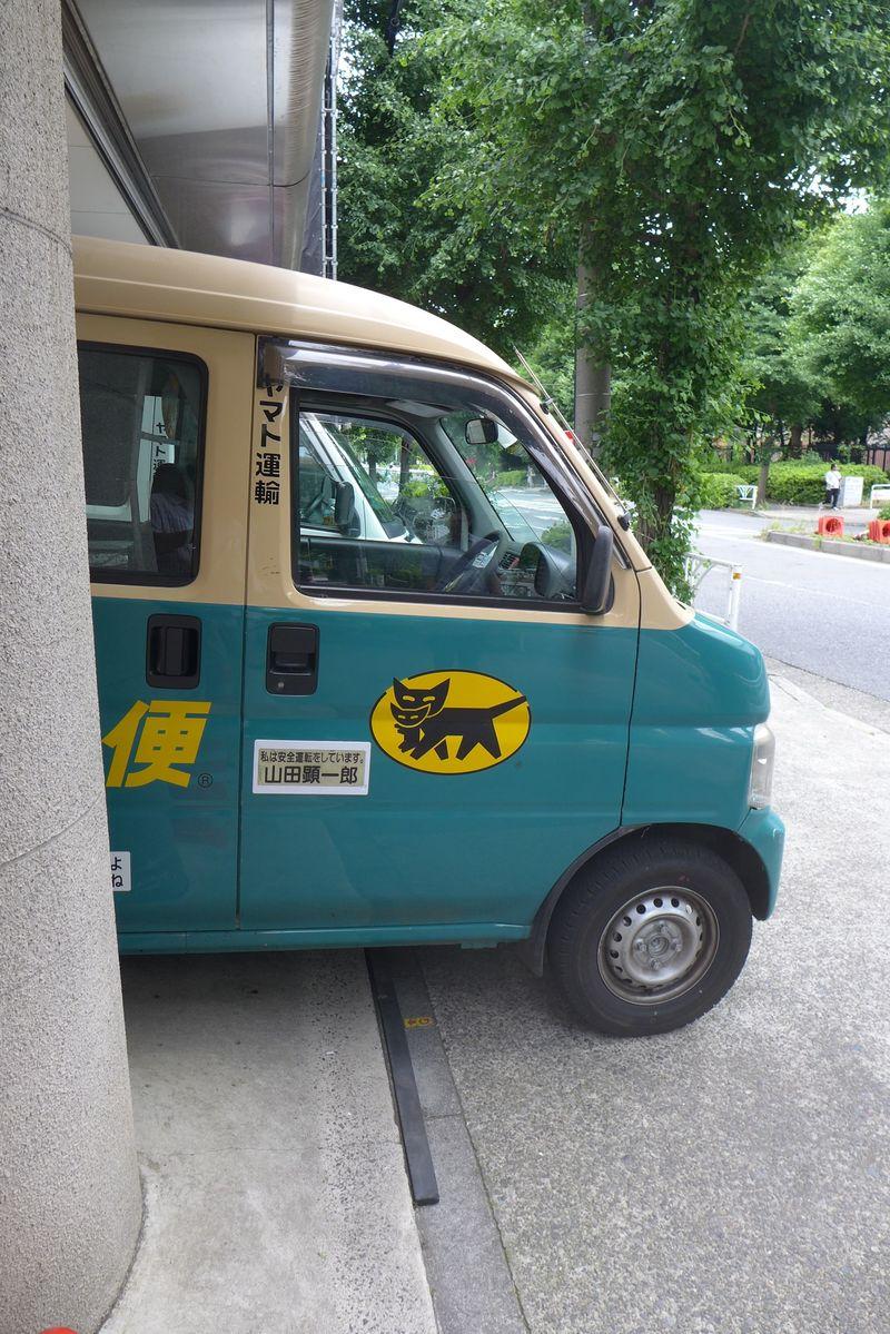 Black cat transport logo