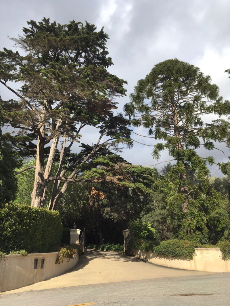 Montecito gate trees2