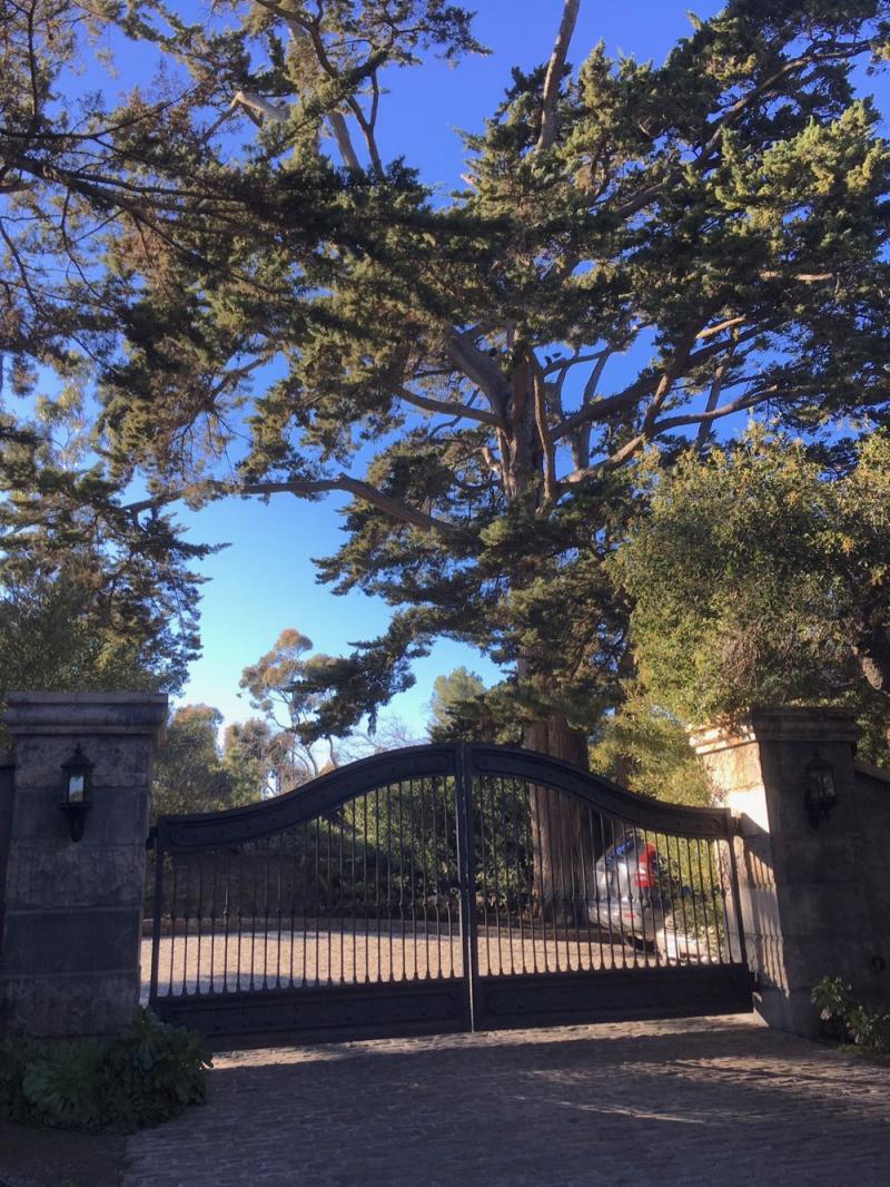 Montecito gate trees2