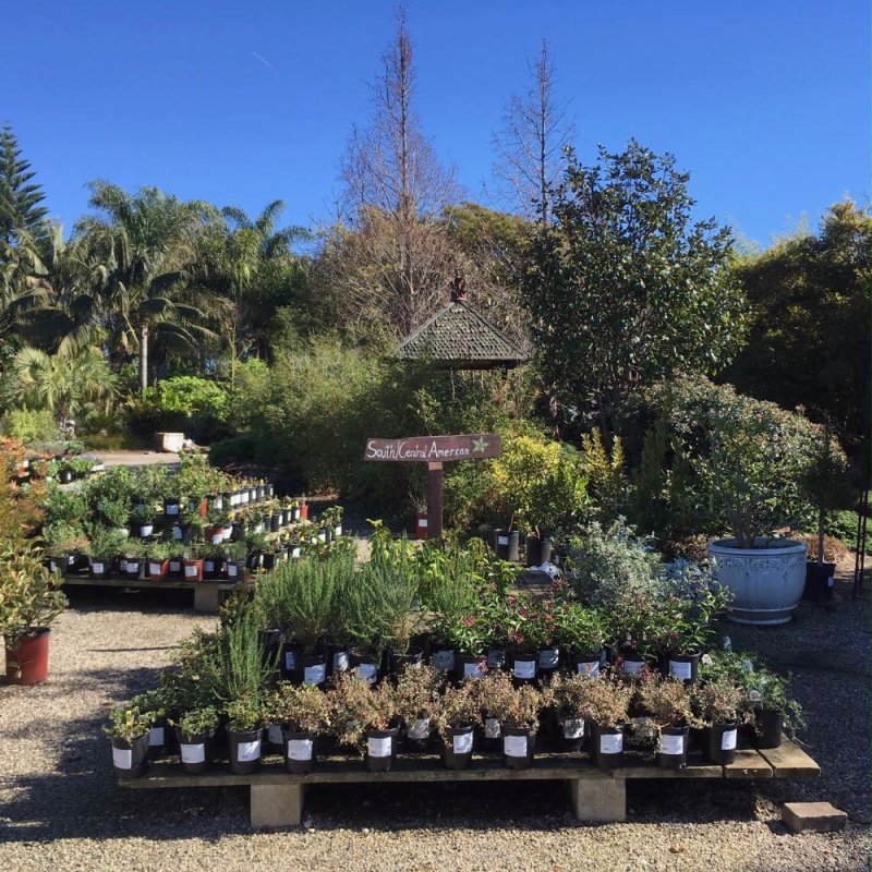 Seaside Gardens nursery2