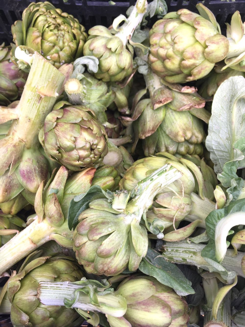 Artichokes at Santa Barbara Farmers Market