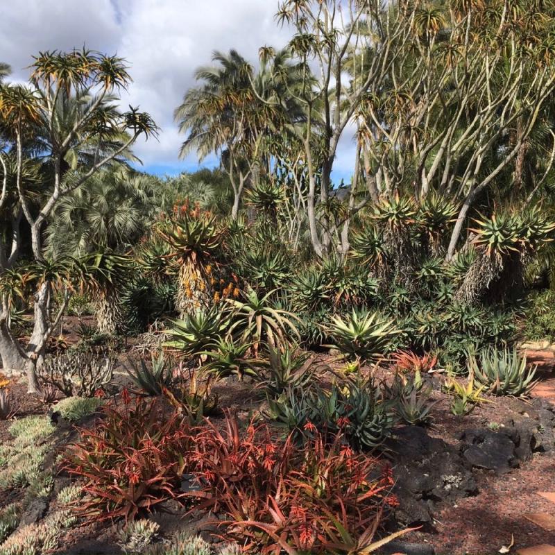 Lotusland yuccas