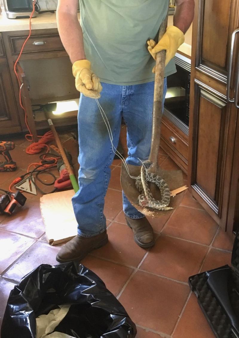 Western rattlesnake dead