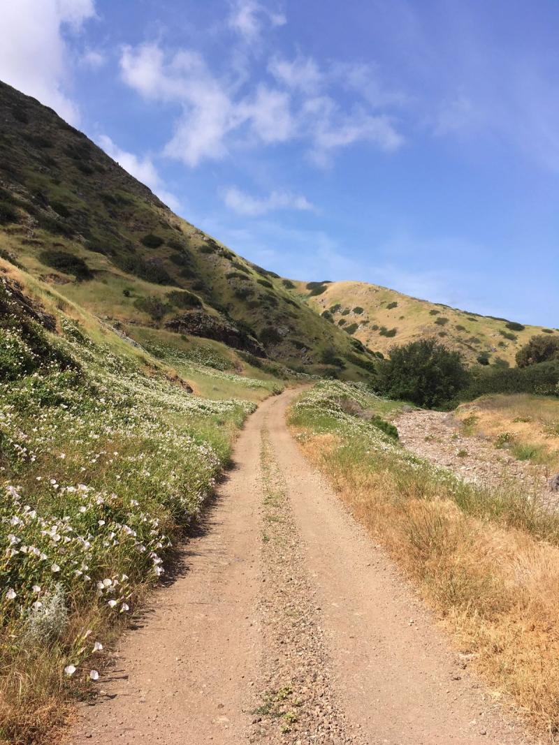 Scorpion Canyon Loop on Santa Cruz Island
