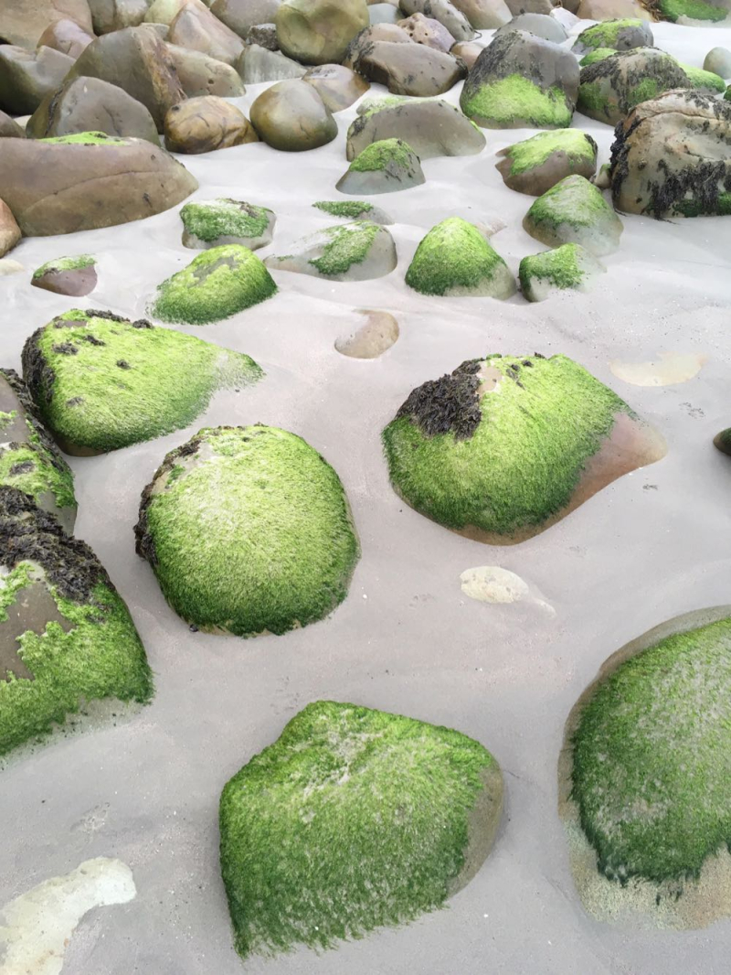 Green stones on Butterfly Beach3