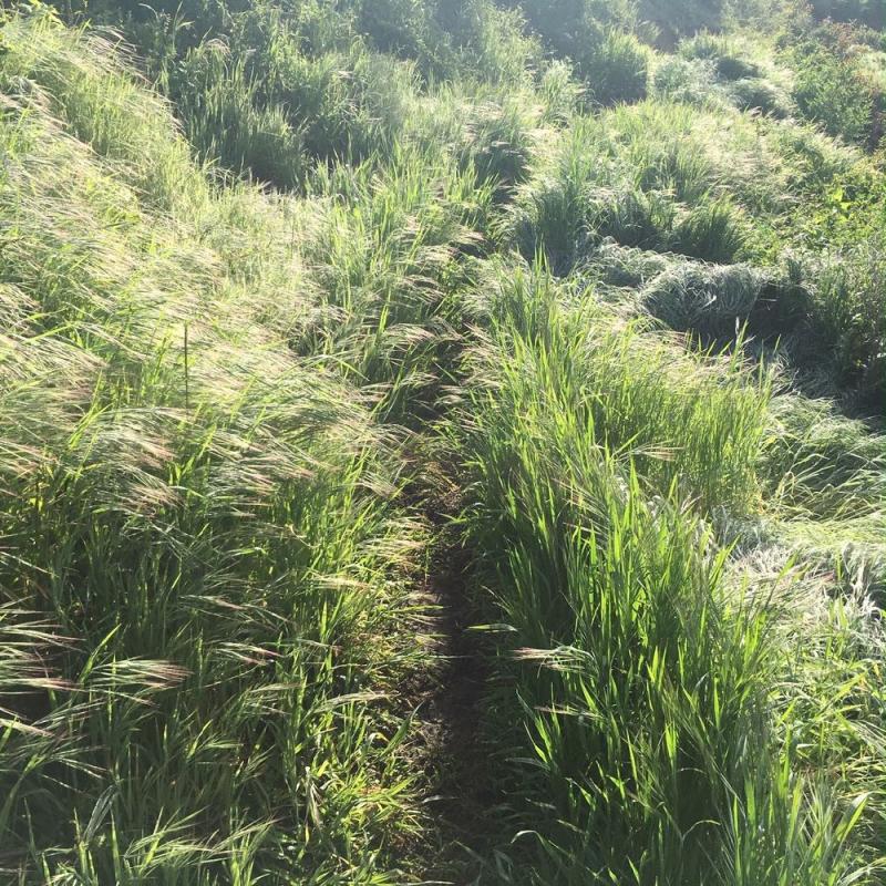 Grassy Montecito trail