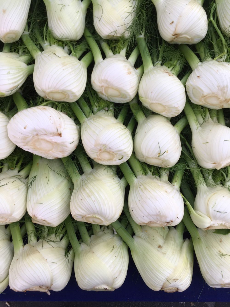 Fennel at the Santa Barbara farmers market