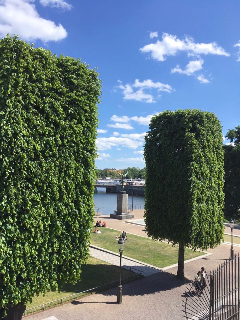 Stockholm trees