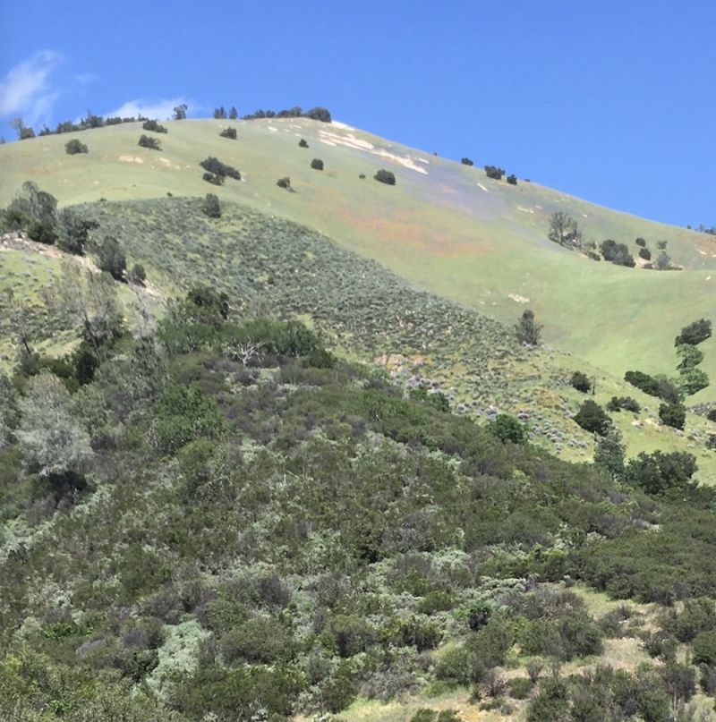 Grass Mountain superbloom