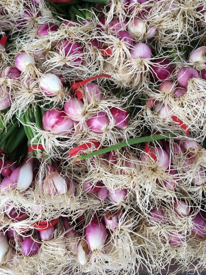 Spring onions at the Santa Barbara farmers market
