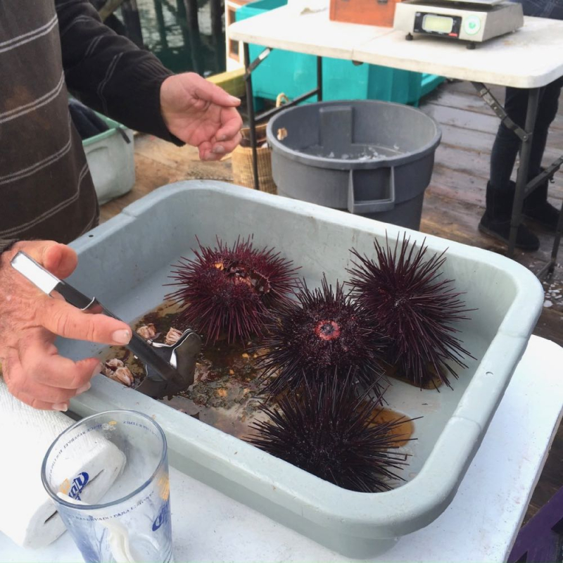 Uni at Santa Barbara Saturday Fishermens Market
