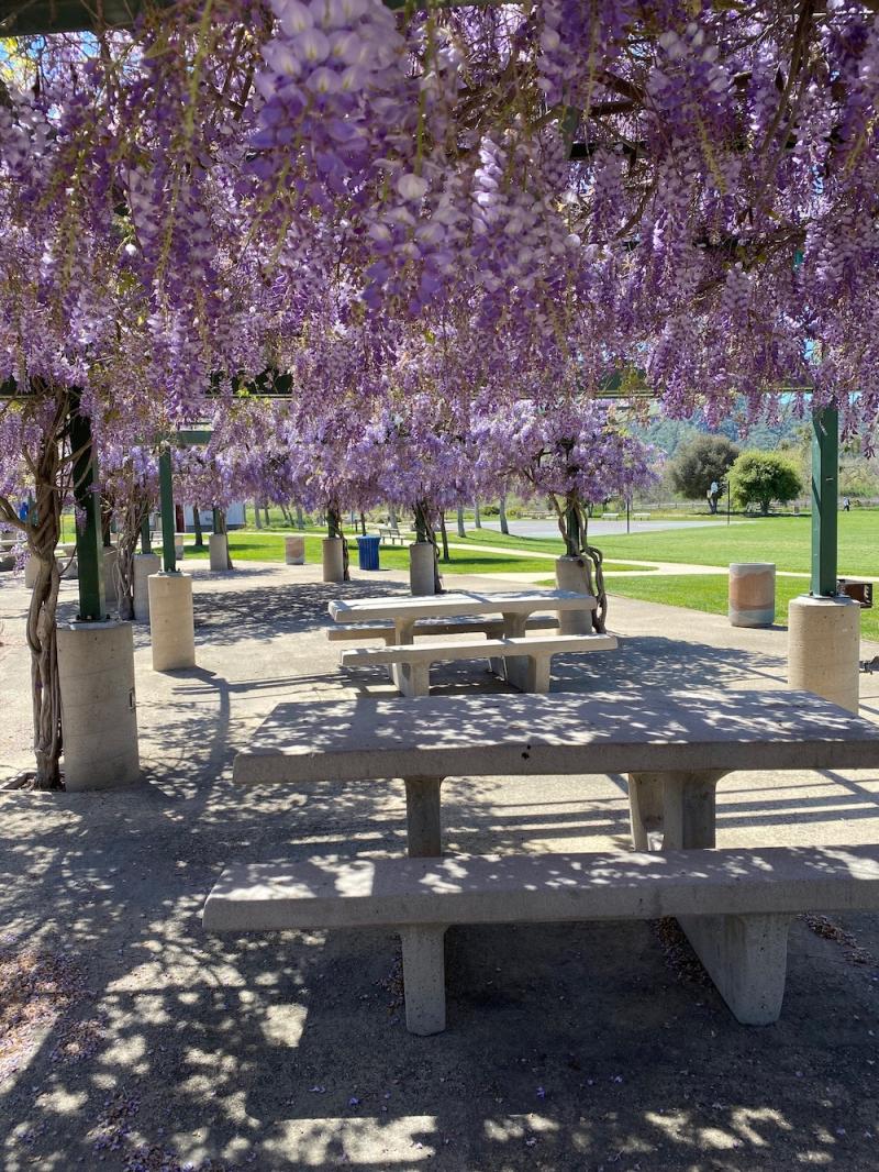 Buellton park